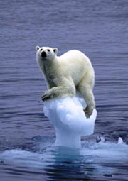 polar_bear_global_warming-1