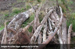 Harvard accused of illegal logging in Chile