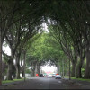 chritschurch-trees